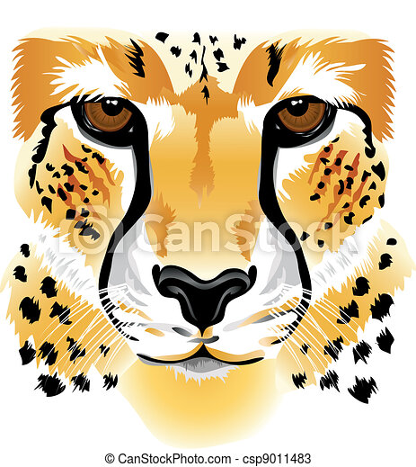 Cheetah face - csp9011483