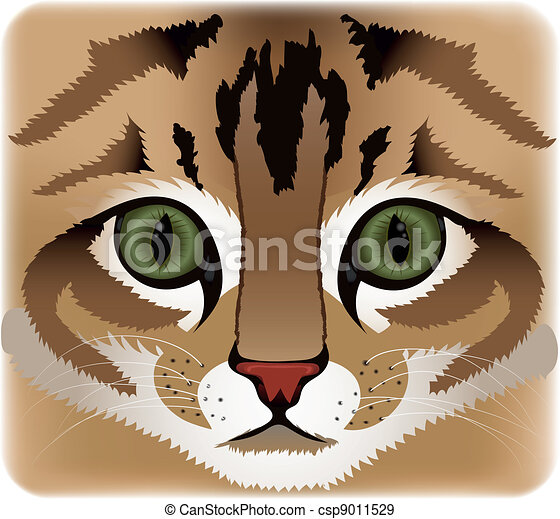 Close up of cat face - csp9011529
