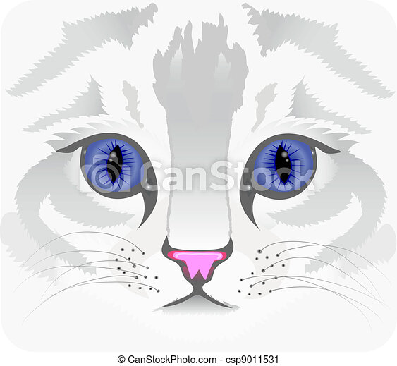 Close up of cat face - csp9011531