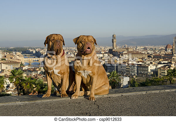 Dogs against Florence city view - csp9012633
