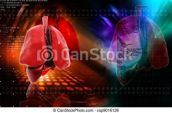 Human lungs  - csp9016126