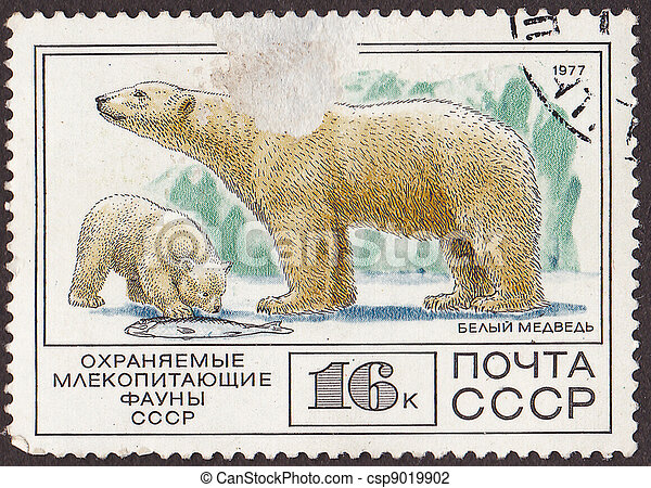 """USSR - CIRCA 1977: A post stamp printed in USSR shows white bears, with the inscription in russian """"protected mammal of  ussr fauna"""". circa 1977  - csp9019902"""