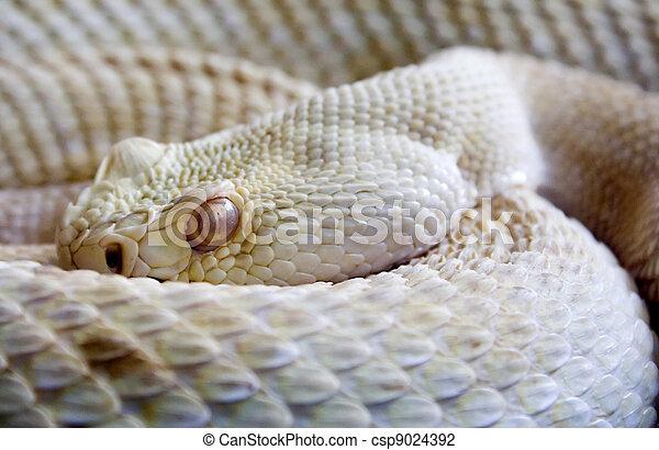 Dangerous snake - csp9024392