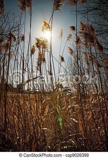 Bright Sun Shines Through Tall Weeds. - csp9026399