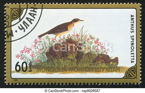 North American bird Species - csp9028587