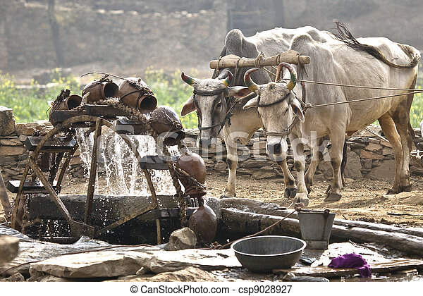 Water wheel powered by cattle - csp9028927