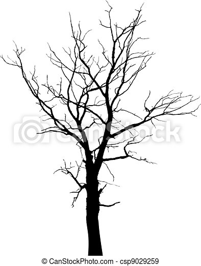 Silhouette of dead tree without leaves - csp9029259
