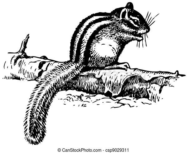 Ground Squirrel - csp9029311