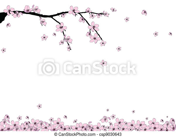Branch of beautiful cherry blossom  - csp9030643