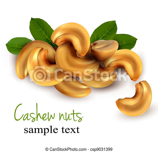 Cashew nuts  Vector illustration  - csp9031399