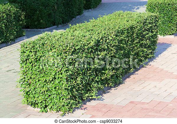 banco de imagens de ornamental arbusto aparado