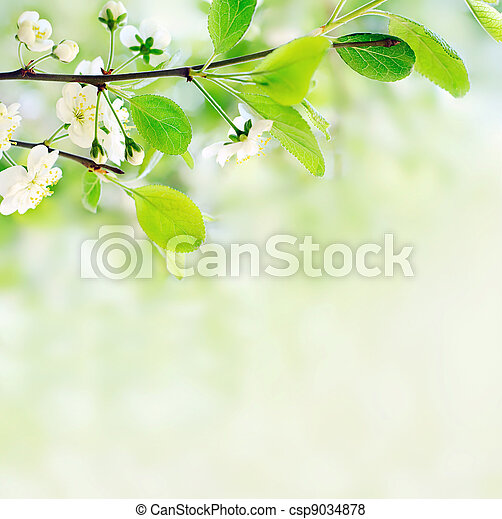 white spring flowers on a tree branch over green bokeh background close-up shallow DOF