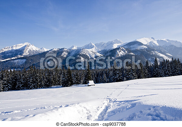 Polish Tatra mountain from Rusinowa Glade - csp9037788