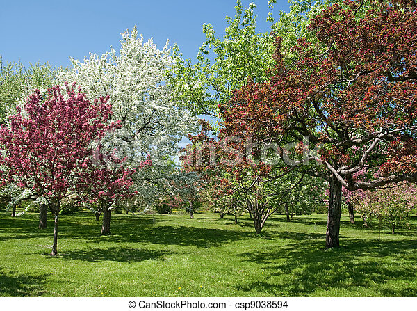 Photo de beau printemps arbres dans fleur printemps for Beaux arbres de jardin