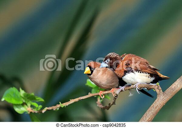 Small songbird on a branch (Amadina) - csp9042835