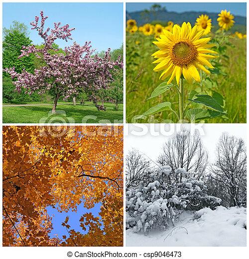 Inverno, primavera, Outono, Quatro, estações, verão - csp9046473