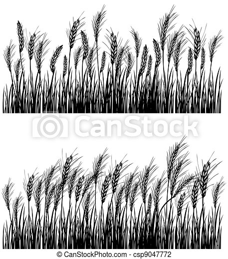 Field of wheat - csp9047772