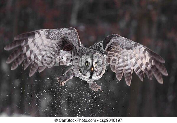 Great Grey Owl or Lapland Owl lat. Strix nebulosa - csp9048197
