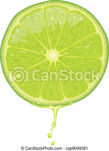 Lime Slice - Vector - csp9049381