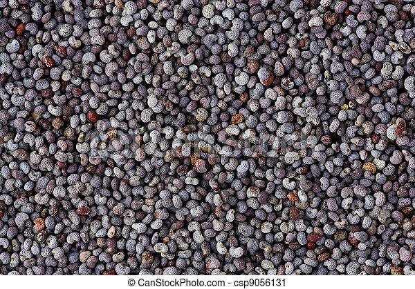 Poppy Seeds (Papaver somniferum) - csp9056131