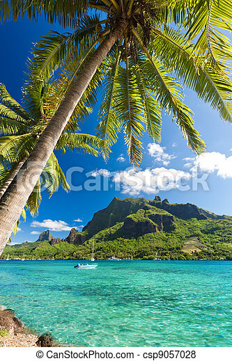 Palm Trees on Shoreline of Ocean at Moorea - csp9057028