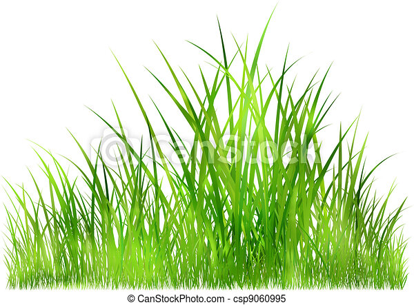 grass in sunlight - csp9060995