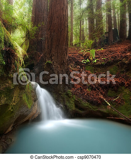 Redwood forest waterfall - csp9070470