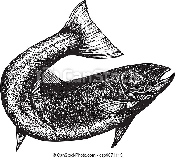 highly detailed sketch of a salmon - csp9071115