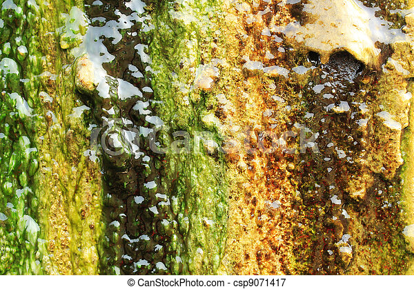 Algae growing on a wall by completely covering it - csp9071417