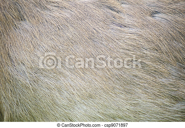 Image of deer skin texture background.