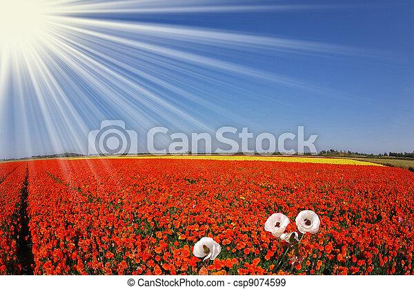 The sun shines  buttercups. - csp9074599