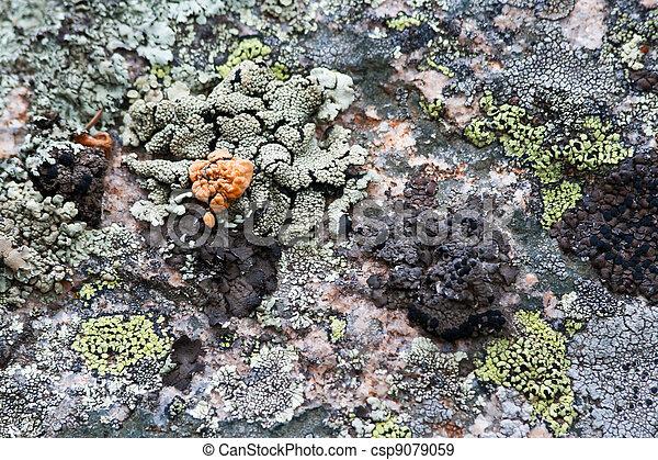 Moss and Lichen Texture Background - csp9079059