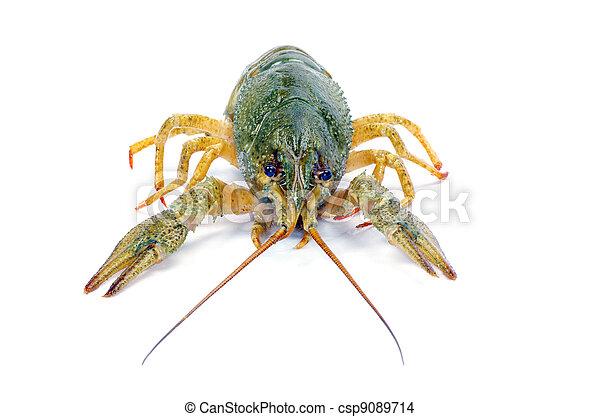 crawfish  - csp9089714