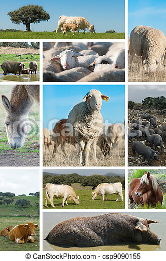 Livestock. - csp9090155