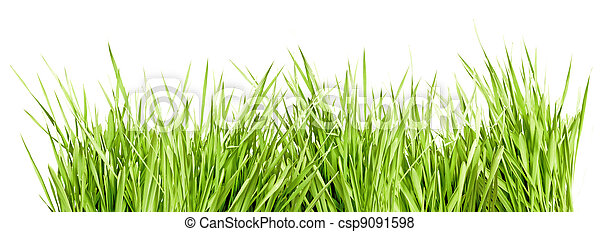 Green Grass - csp9091598