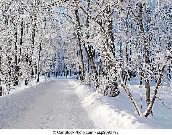 Winter road  - csp9092797