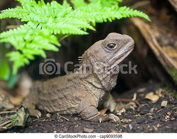 Tuatara new zealand native reptile - csp9093598