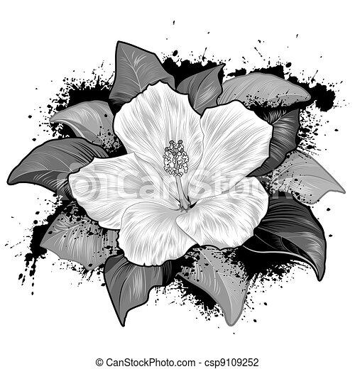 Illustrazioni vettoriali di ibisco bianco fiore disegno for Piani di piantagione hawaiana