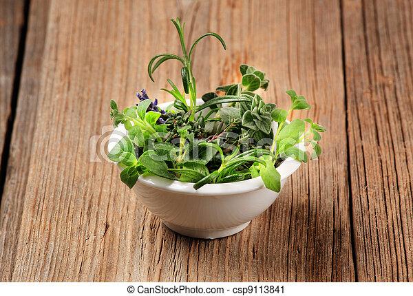Culinary herbs  - csp9113841