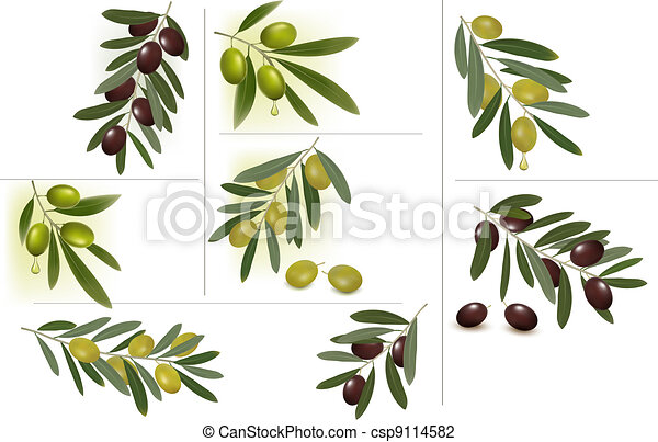 Set of backgrounds with green olive - csp9114582
