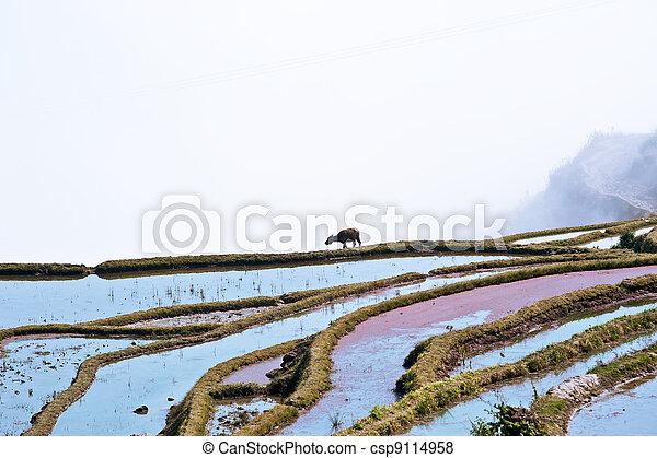 China Yunnan, Yuanyang terraced color - csp9114958