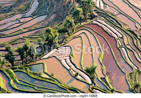 China Yunnan, Yuanyang terraced color - csp9114968