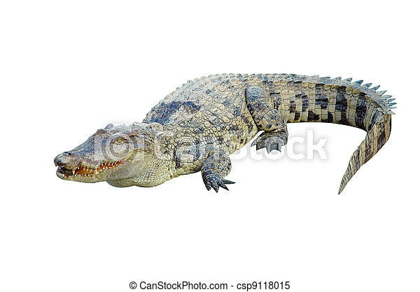crocodile isolated - csp9118015