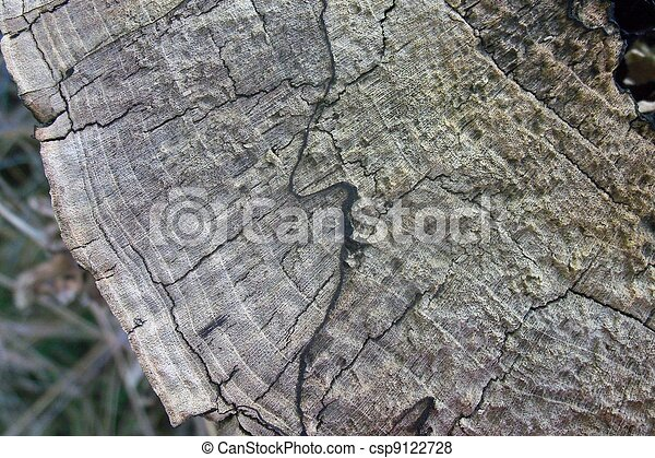 Cirle of wood - csp9122728