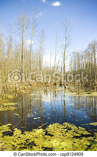 deep bog in a thicket. - csp9124909