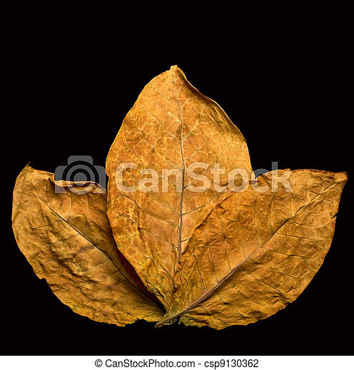 dry leafs  - csp9130362