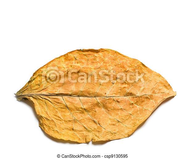 dry leaf - csp9130595