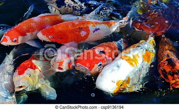Stock photo of koi fish colorful ornamental koi fish in for Ornamental pond fish inc