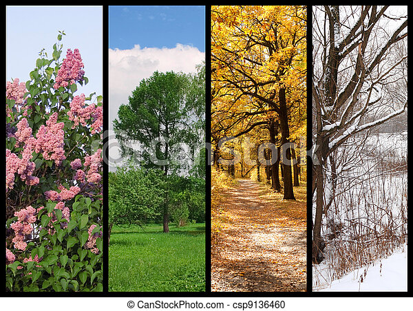 four seasons spring, summer, autumn, winter trees collage with border - csp9136460