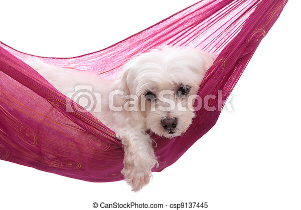 Pampered puppy lying in hammock - csp9137445